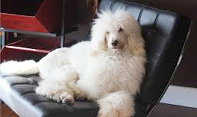 Dog-Leo