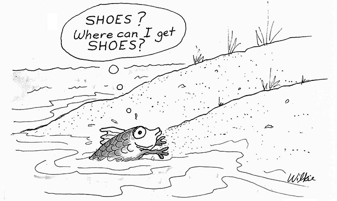 Wilkie - shoes