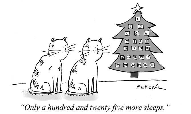 Percival - cat naps