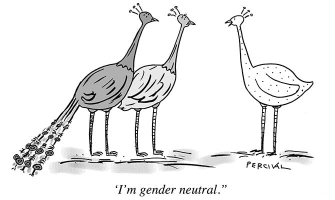 Percival - Gender neutral