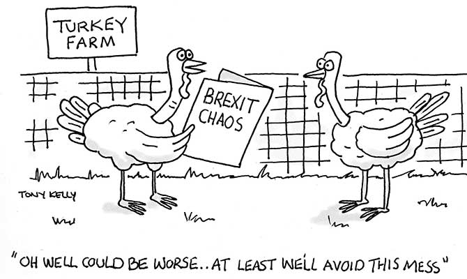 Kelly - Turkey farm