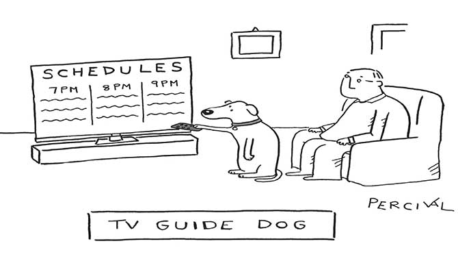 tv-guide-dog