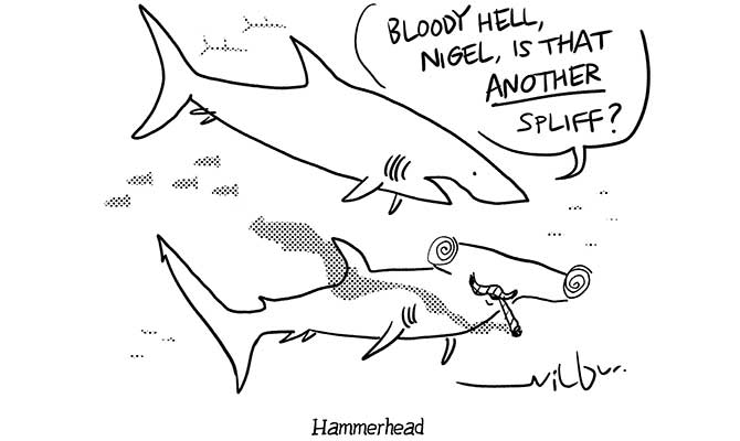 Wilbur - Hammerhead shark