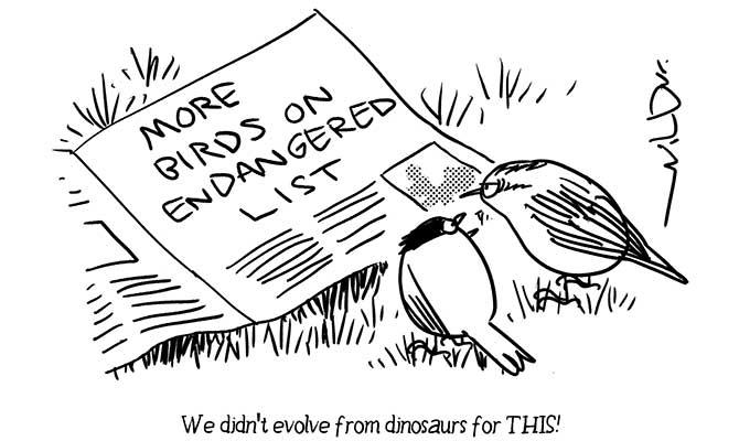 Wilbur -Envt birds