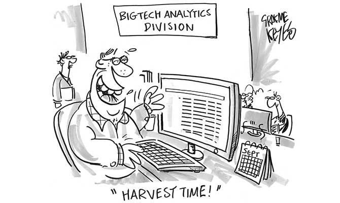 Keyes - Harvest time